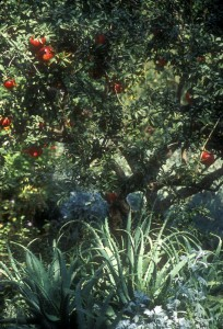 Sparoza - Pomegranates and Aloes
